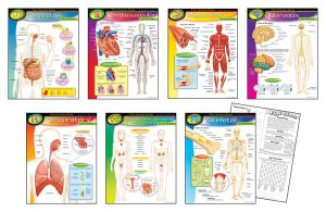Human Body Chart Combo Pack
