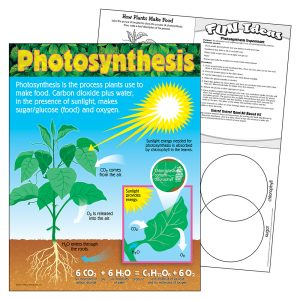 Photosynthesis Learning Chart